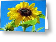 Sun Flower - Id 16235-142741-1520 Greeting Card