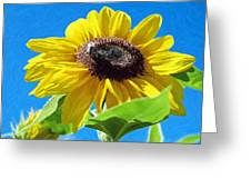 Sun Flower - Id 16235-142743-3974 Greeting Card