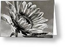 Sun Flower - Id 16235-142753-8673 Greeting Card