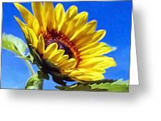Sun Flower - Id 16235-142812-7136 Greeting Card