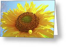 Sun Flowers Art Sunflower Giclee Prints Baslee Troutman  Greeting Card