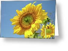 Sun Flowers Garden Art Prints Baslee Troutman Greeting Card