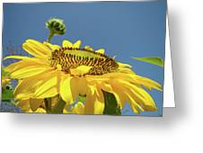 Sun Flowers Summer Sunny Day 8 Blue Skies Giclee Art Prints Baslee Troutman Greeting Card