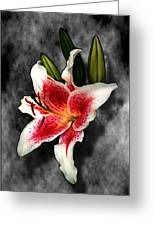 Sun Gazer Lily Greeting Card