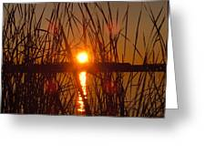 Sun In Reeds Greeting Card