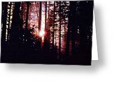 Sun In The Forest Two  Greeting Card