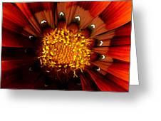 Sun In The Garden Greeting Card
