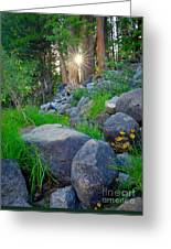 Sun In The Sequoias Greeting Card