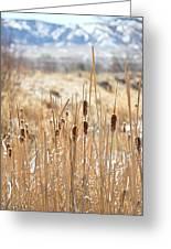 Sun Kissed Cattails - Casper Wyoming Greeting Card