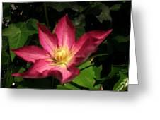 Sun Kissed Flower Greeting Card