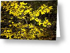 Sun-kissed Golden Leaves 2 Greeting Card