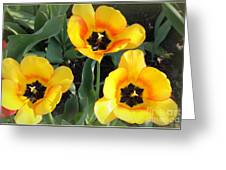 Tulips Kissed By The Sun Greeting Card