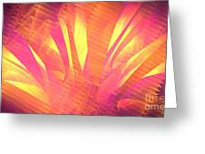 Sun Leaves Greeting Card