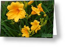 Sun Lily Greeting Card