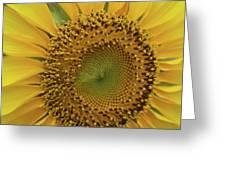 Sun Of Flowers Greeting Card