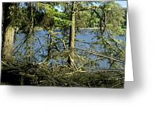 Sun Of The Loch Afternoon. Greeting Card