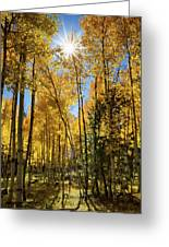 Sun Peaking Through The Aspens  Greeting Card