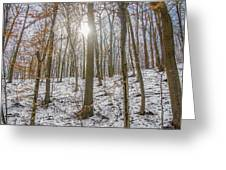 Sun Peaking Through The Trees - Fairmount Park Greeting Card