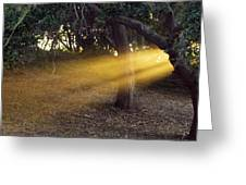 Sun Rays 2 Greeting Card
