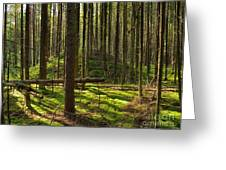 Sun Rays In Forest Greeting Card