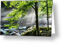 Sun Rays On Williams River  Greeting Card