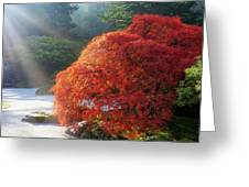 Sun Rays Over Old Japanese Maple Tree Greeting Card