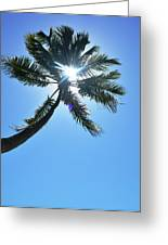 Sun Rays Through A Tall Palm Tree Greeting Card