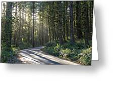 Sun Rays Through The Forest Greeting Card