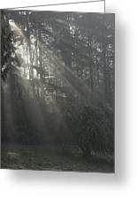 Sun Rays Through The Trees On A Foggy Winter Day Greeting Card