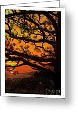 Sun Set At Rancho Palos Verdes, Cali Greeting Card