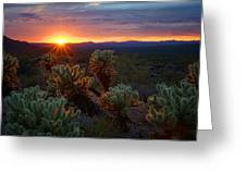Sun Sets Over The Sonoran  Greeting Card