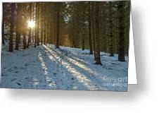 Sun Setting On Winter Woods Greeting Card