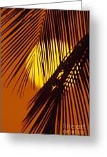 Sun Shining Through Palms Greeting Card