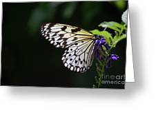 Sun Shining Through The Wings Of A Rice Paper Butterfly Greeting Card
