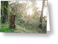 Sun Shining Through Trees In A Mysterious Forest Greeting Card