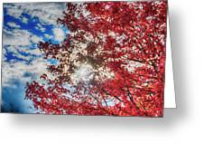 Sun Sky Clouds And A Red Maple Greeting Card