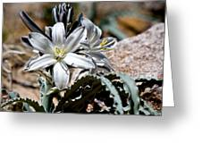 Sun Soaked Desert Lily Greeting Card