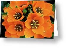 Sun Star Greeting Card