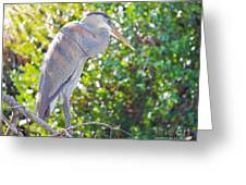 Sun Streaked Greeting Card