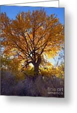 Sun Through Golden Leaves Greeting Card