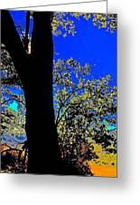 Sun Through Oak V3 Greeting Card
