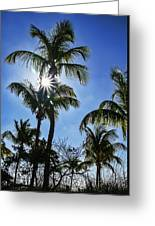 Sun Through Smathers Beach Palms Greeting Card