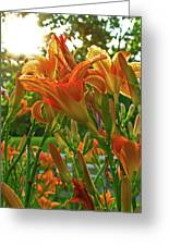 Sun Through The Tiger Lily Greeting Card