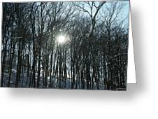 Sun Through The Trees Greeting Card