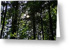 Sun Through Trees In Forest Greeting Card