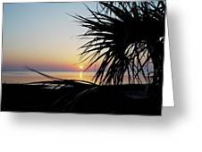 Sun Touched Greeting Card