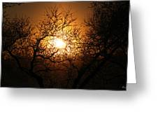 Sun Trees Greeting Card