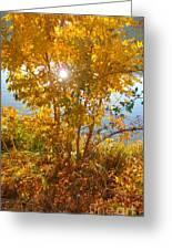 Sun Warmth Greeting Card