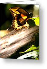 Sunbathing Butterfly Greeting Card