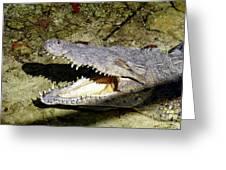 Sunbathing Croc Greeting Card